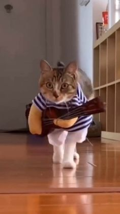 Cat Funny Clothes - This cool pirate costume design turns your pet into a humoristic pirate. and the rocker with guitar looks very cool. Funny Animal Videos, Cute Funny Animals, Cute Baby Animals, Funny Cute, Videos Funny, Pet Clothes, Funny Clothes, Funny Outfits, Cat Costumes