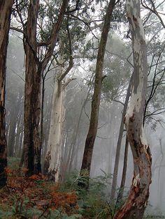 'Ghosts in the Mist - Victorian Alps, Victoria Australia' by Philip Johnson Outback Australia, Australia Travel, Australia Winter, Australia Funny, Australian Painting, Australian Artists, Australia Landscape, Australian Bush, Snowy Mountains