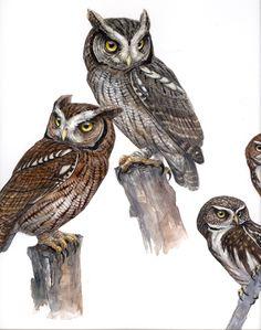Owl Art (artist unknown) Tropical Screech Owls and Ferruginous Pygmy Owls Owl Bags, Owl Quilts, Screech Owl, Owl Photos, Owl Cartoon, Felt Owls, Horned Owl, Owl Patterns, Bird Illustration