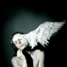 white wing