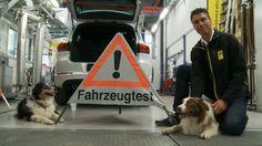 TCS Test: surriscaldamento auto al sole Dogs, Animals, Advice, Automobile, Rolling Stock, Animales, Animaux, Animal Memes, Animal