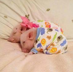 Adorable piglets...