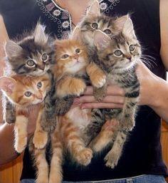 Handful of kittens!!