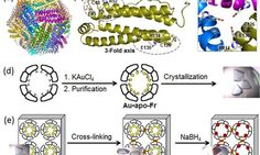 Nanocages for gold particles: What is happening inside?