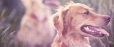 Otur Komutunu Öğretmek   Köpekler Hakkında Herşey