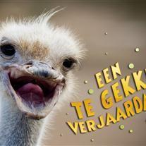 grappige verjaardagskaart 28 best Grappige verjaardagskaarten images on Pinterest | Happy b  grappige verjaardagskaart