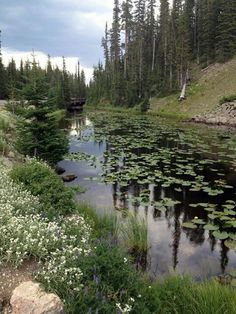Find a good book and just relax by the water. Yellowstone National Park, National Parks, Summer Scenes, Lily Bloom, Continental Divide, Sea To Shining Sea, Water Lilies, Rocky Mountains, Wyoming