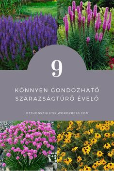 Dream Garden, Home And Garden, Lake Forest, Permaculture, Garden Planning, Outdoor Gardens, Lawn, Garden Design, Backyard