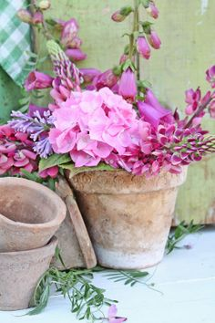 Old pots  flowers