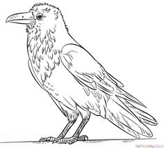 How to draw a raven step by step. Drawing tutorials for kids and beginners.