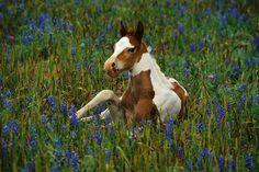 Georgia Paint Horse Club horses