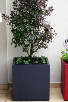 TERASA OLOMOUC 08/2014   Výroba-květináče.cz Plants, Plant, Planets
