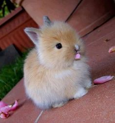 so cute Adorable Amazing  Fluffy Fuzzy Loving ❤️