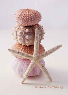 Sea Urchin and Starfish still life beach decor by JaniceMcCafferty