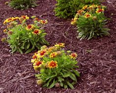 When applied correctly, an organic mulch will prevent many weeds, reduce erosion, moderate the growing season's temperature extremes and slow down soil compaction and water evaporation. Contact us and we'll deliver mulch right where you need it! 847.366.8869