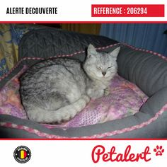 03.02.2020 / Chat / Rhode-Saint-GenèseBrabant flamand / Belgique Saint, Belgium, Cat Breeds, Animaux