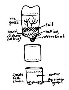 Here's what you'll need:  3 empty and clear 2-liter bottles  clear packing tape  aquarium gravel (or fine, rinsed pea gravel)  water  de-chlorinator (optional)  rubber band  4-inch square piece of netting  soil  mustard, rye or alfalfa seeds  fish, snails or other aquatic life  elodea or other aquarium plants  duck weed  crickets, pill bugs or earthworms  a couple dead leaves or small sticks