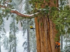 The Giant Of Humboldt Redwoods State Park, USA – Extreme Outdoor Tourism Adventure - Easy Idea (2)