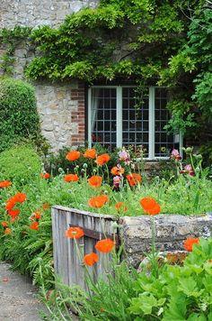 cottage garden - poppies -(1) Tumblr
