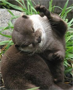 HEY HUMAN ~ HOW ARE YOU?!  I LOVE OTTERS <3
