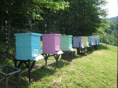 Love the colors! The Bee Keepers – Daily Yonder