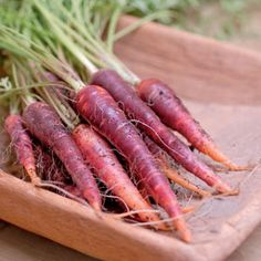 The Color Purple. Purple carrots have all the tasty benefits of their orange counterparts, and then some. | Organic Gardening