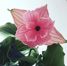 Blush interior styling II Medinilla II Home deco