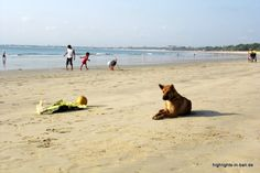 Ein #Hund am #Strand von #Jimbaran auf #Bali einem der schönsten Strände uns Surfspots der Insel! http://www.highlights-in-bali.de/ferienorte-auf-bali/jimbaran/