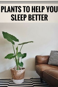 12 Plants For Your Bedroom That Will Improve Sleep Quality And Cure Insomnia ,`;