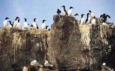 Farne-Island-British-Natural-Wonders