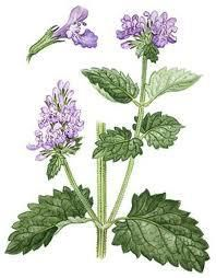 Catnip tea contains vitamins A, B, and C, calcium, iron, magnesium, manganese, phosphorus, potassium, selenium, and sodium. It is also a sedative, digestive aid and help for migraine's. Place 1-2 tsp of dried catnip flowers and leaves in a container and pour a cup of hot, not boiling water, and cover. Wait 10-15 minutes