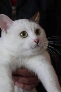 TUNO (G) - Gato en adopción - Alicante Adopta