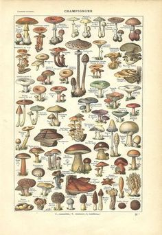 Meishe Art Vintage Poster Print Mushrooms Champignons Identification Reference Chart Diagram Illustration Botanical Educational Wall Decor *** Click image for more details. (This is an affiliate link) Art Vintage, Vintage Posters, Vintage Travel, Galerie Creation, Decoupage, France Culture, Mushroom Art, Poster Prints, Art Prints