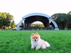 "Happy Throwback Thursday.  Here is a piece I wrote on "" The Great Lawn "" in Central Park  The Great Lawn has presented over the years some of the most popular concert events in the history of New York. The lawn is 55 acres of green pastors where people play softball, soccer, frisbee, as well as picnicking, and sunbathing.  On September 15th, Andrea Bocelli performed in Central Park at the Great Lawn for 60,000 people. Location: Mid-Park from 79th to 85th Street."
