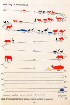 1939 Infographic: Gerd Arntz for Compton's pictured encyclopedia, 1939 So lang ist die Lebenserwartung von verschiedenen Tieren.
