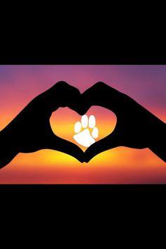 I love Clemson!!!