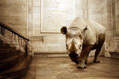 Astor Hall Rhino. Mikel Uribetxeberria Gonzalez