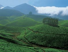 Idukki high ranges - for a unique experience of mountain ranges