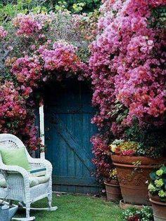 Rampicanti in fiore per l'ingresso in casa.