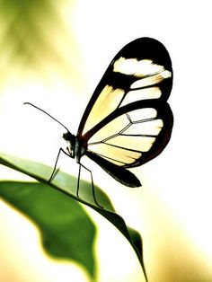 Butterfly By Toula Mavridou-messer벨루가카지노 KC7777.COM 벨루가카지노