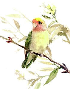 Lovebird Art Print by Suren Nersisyan. All prints are professionally printed, packaged, and shipped within 3 - 4 business days. Choose from multiple sizes and hundreds of frame and mat options. Watercolor Paintings For Beginners, Watercolor Artwork, Watercolor Bird, Watercolor Animals, Watercolor Landscape, Watercolor Portraits, Bird Painting Acrylic, Love Birds, Birds 2