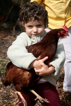 Chickens Can Be Pets Too? ... #pets #animals ... PetsLady.com