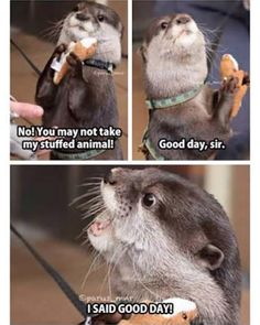 """17 Hilarious Animal Memes To Keep You Going - Funny memes that """"GET IT"""" and want you to too. Get the latest funniest memes and keep up what is going on in the meme-o-sphere. Cute Animal Memes, Funny Animal Quotes, Animal Jokes, Funny Animal Videos, Cute Funny Animals, Funny Cute, Funny Dogs, Funny Animal Humour, Hilarious Animal Memes"""