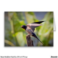 Barn Swallow Card