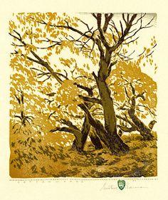 "Gustave Baumann: ""Cottonwoods"", 1927; color woodcut."