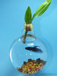Upcycled Light Bulb Fish Bowl by TheMidwa