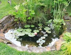 Yard How To Create A Wildlife Pond   A Beautiful Wildlife Pond Will Attract  A Whole Host Of Beneficial Animals, Birds And Insects.