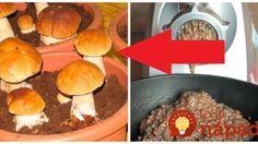 Trik od skúsenej hubárky: Odložte si pár húb bokom, zomeľte ich v mlynčeku na mäso a dajte do črepníka, vyrastie vám táto nádhera!