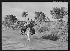 Bethlehem (vicinity), Saint Croix Island, Virgin Islands. Children going home from school by donkey cart. Contributor Names: Delano, Jack, photographer. Created / Published 1941 Dec. Courtesy: Library of Congress Prints and Photographs Division Washington, D.C. (USA).