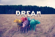 gray malin takes the viewer on a strangely surreal journey to australia, where he has photographed a flock of vibrantly-colored sheep for 'the dream series'